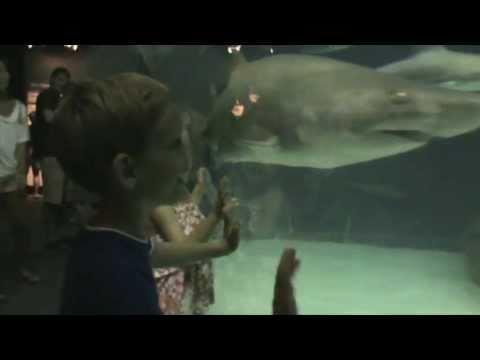 On The Road: Roanoke Island Aquarium