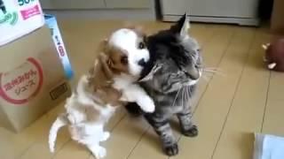 Прикольные щенок и кошка. Funny puppy and cat