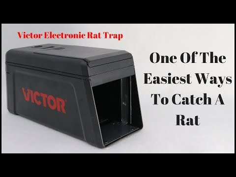 One Of The Easiest Ways To Catch A Rat - The Victor Electronic Rat Trap