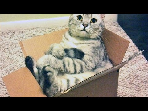 Cats love boxes  Funny cat compilation