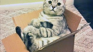 Cats love boxes – Funny cat compilation