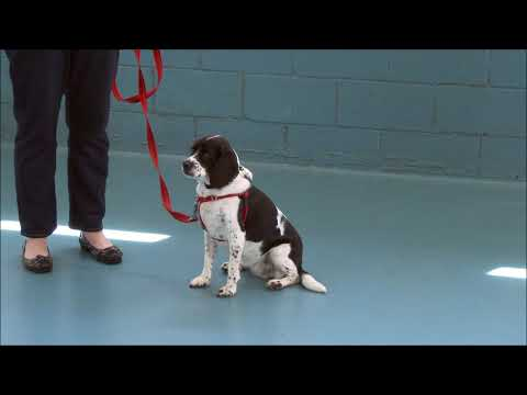 Reactive Dog Training  How to teach dogs not to lunge / bark on leash