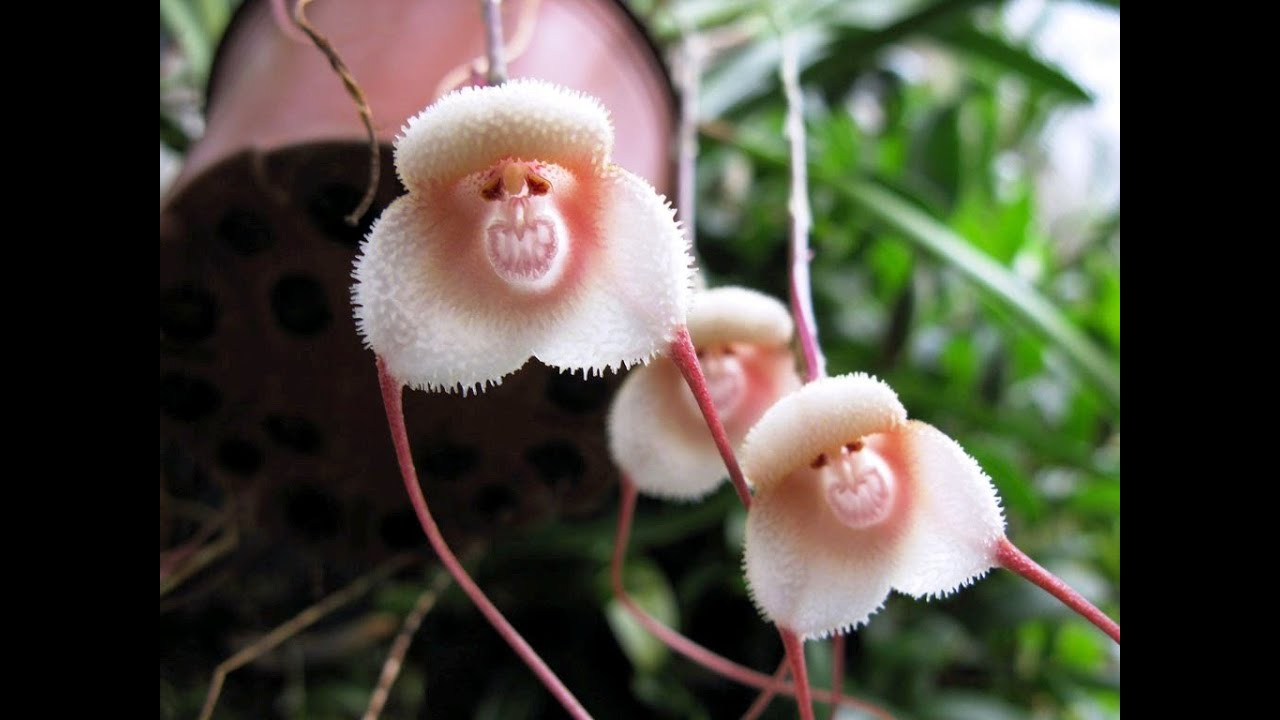 Flowers that look like animalsinsects and people youtube izmirmasajfo