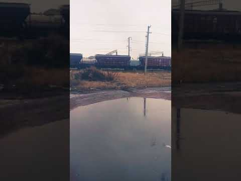 Одичавшие вагоны))