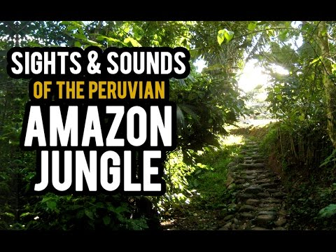Sights And Sounds of the Peruvian Amazon