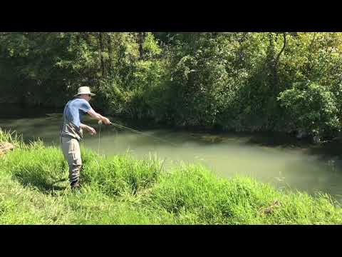Fly Fishing - Mossy Creek  -September 2019