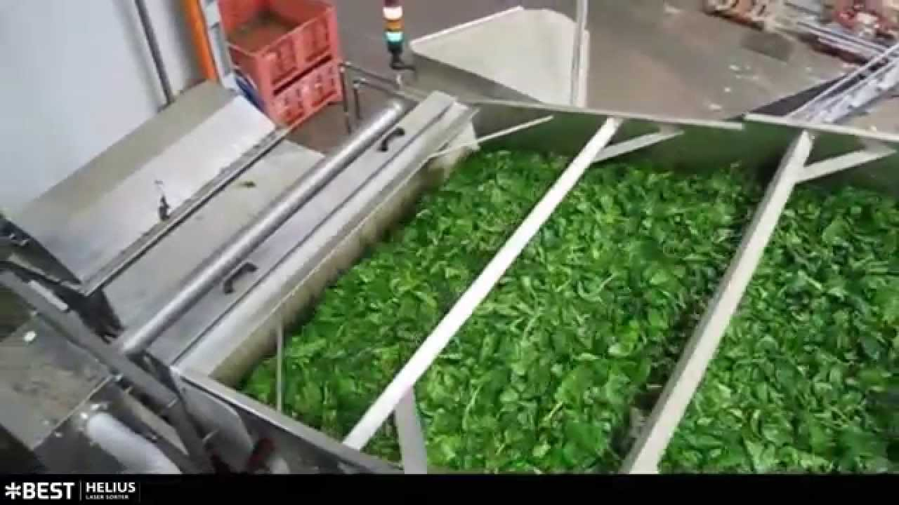 Spinach sorter Helius - TOMRA Sorting