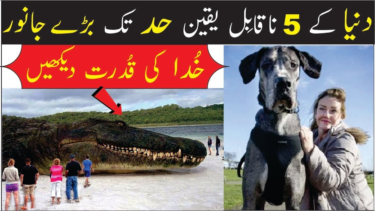 5 Beautiful and Amazing Animals | Urdu | Hindi |