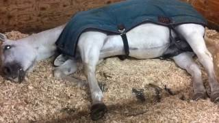 My horse running in her sleep