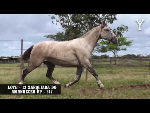 LOTE   13 XARQUIADA DO AMANHECER RP   217
