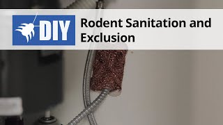 Rat Sanitation and Exclusion