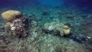 괌 스노클링  Guam Snorkeling & Dolphin Cruise by Gopro