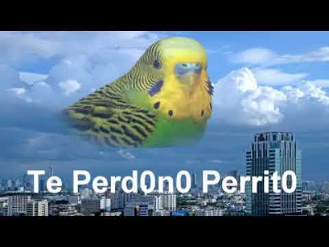 Te Perdono Perrito Chimuelo Memevideo Youtube