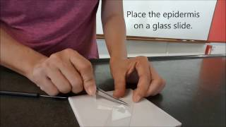 How to prepare plant cell slide