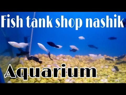 Aqua planet aquarium fish shop pet market nashik