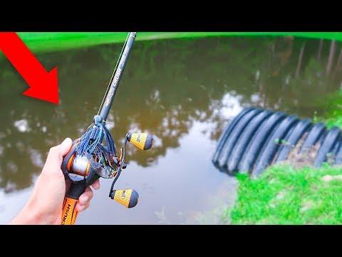 Catching ENORMOUS Bass on BIG JIGS (Bank Fishing)