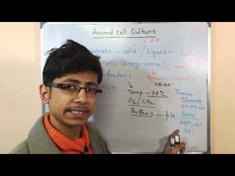 Animal cell culture 9 - culture media