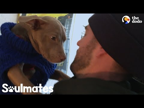 What Happens After You Rescue A Dog | The Dodo Soulmates