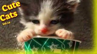 Cute Cat Videos Vol.14  Funny Cat Videos 2021  Cute Cat Video 2021