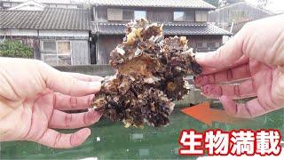 民家の桟橋で貝を採り餌にして釣りをしてみた結果! thumbnail