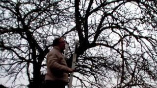 Repeat youtube video Schneiden im Garten 2011 - Apfelhochstamm 4v6