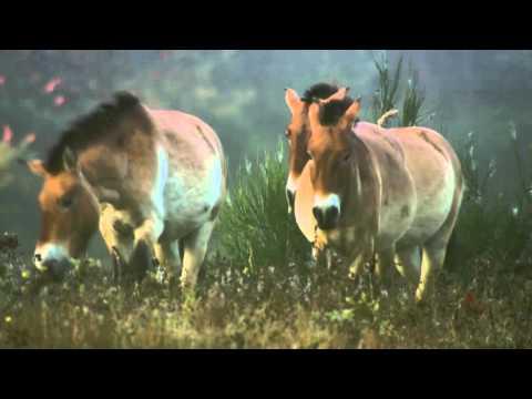 дикая природа  Чернобыля - Прикольное видео онлайн