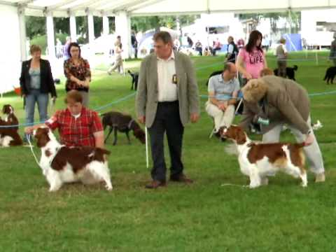 Welsh Kennel Club - Aug 2010 - Welsh Springers