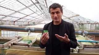 Живая спирулина - ферма(, 2014-09-09T19:20:01.000Z)