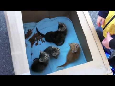 Free Farm Kittens