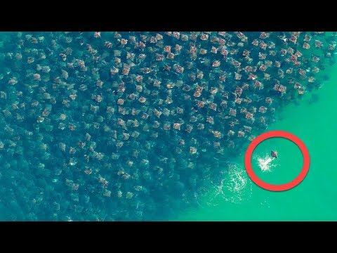 I Thought This Was A Bunch Of Trash In The Ocean, Until I Zoomed In And…! This Is Beyond Words.