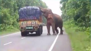 देखेंः पश्चिम बंगाल के जंगल में हाथी ने ट्रक को रोककर खाए आलू