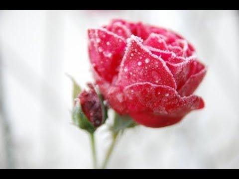 ♥ Ƹ̵̡Ӝ̵̨̄Ʒ ♥ Nikos Ignatiadis ~ Mis Amores An Anixis Tin Cardia Mou