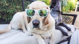 Pet Adoption Fair// Dog Vlog