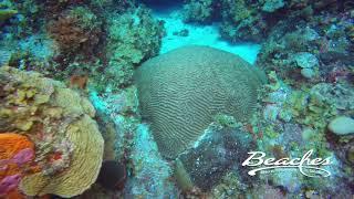 Beaches Resorts - Deep Plane Scuba Exploration At Negril