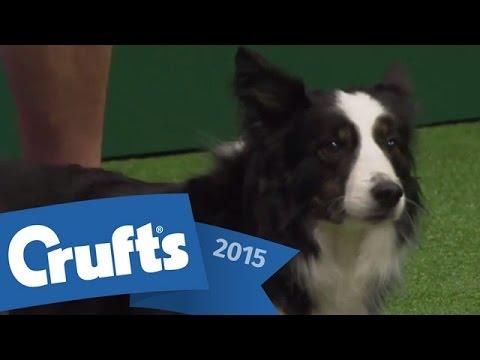 Agility - International Invitation - Large Finals | Crufts 2015