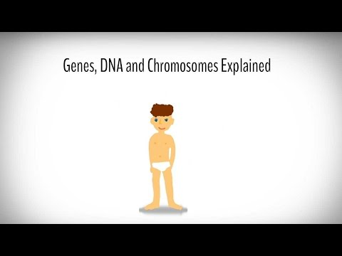 Genes, DNA and Chromosomes explained