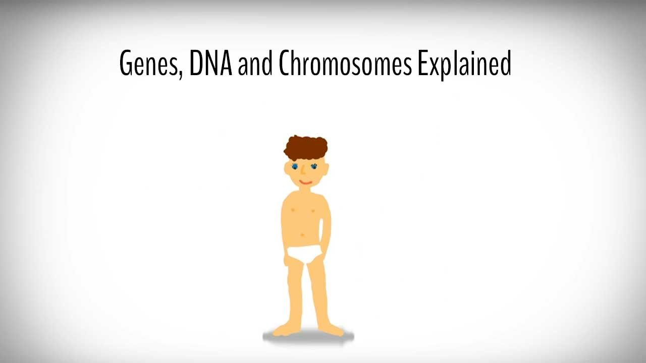 genes dna and chromosomes explained [ 1280 x 720 Pixel ]