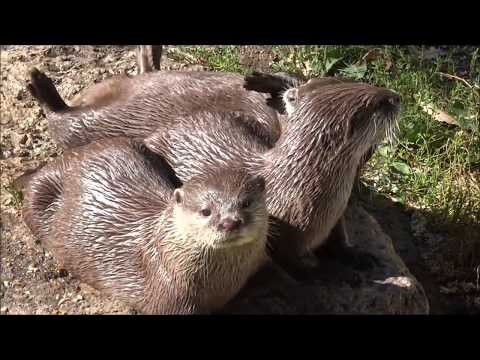 Otter Greetings CardI gotta whole otter love for you
