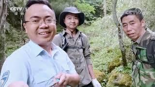 [正大综艺·动物来啦]在冬季野生大熊猫会选择什么区域来生活| CCTV - YouTube