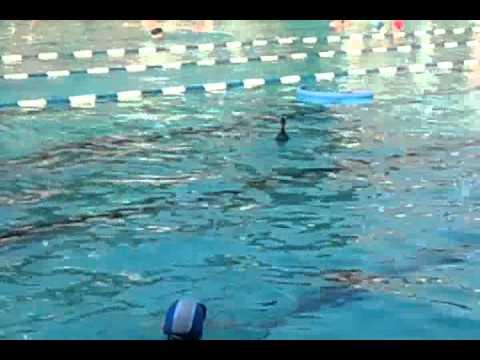 Una papera nuota in piscina tra i bagnanti succede all 39 eur roma youtube - Piscina eur roma ...