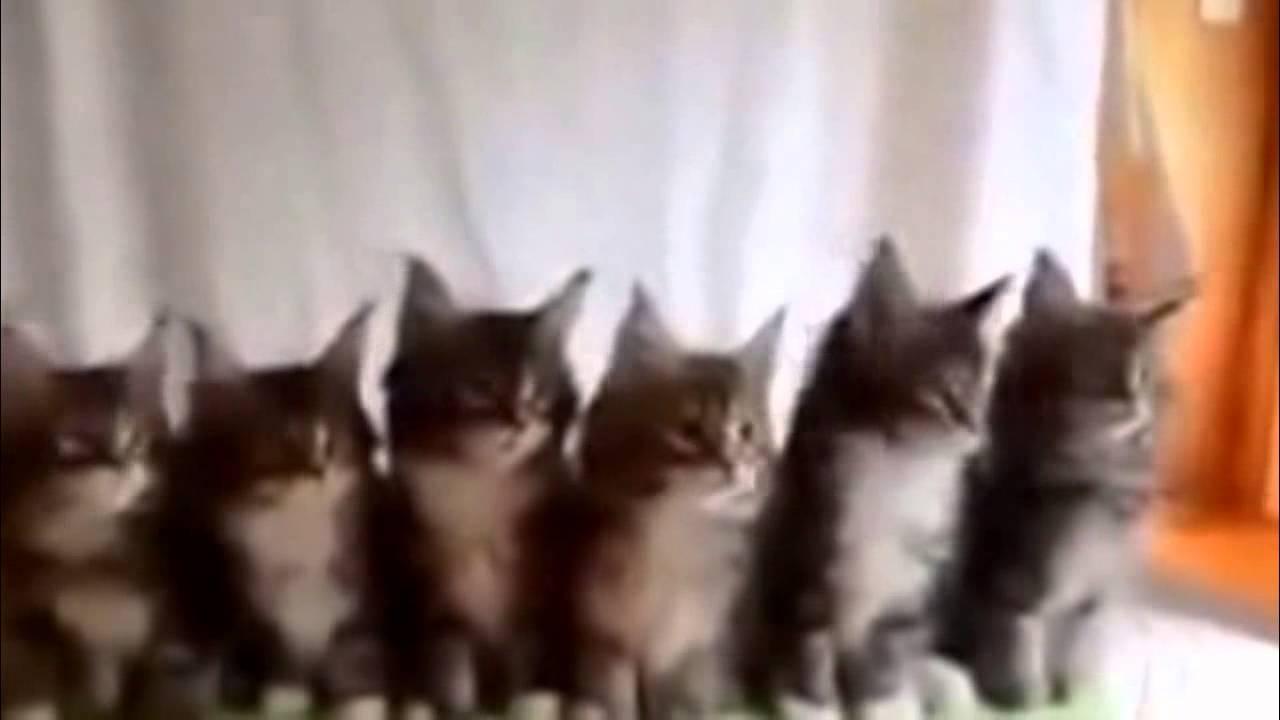Видео про смешных котов которые танцуют