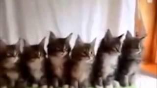 Видео про кошек смешные Котята танцуют