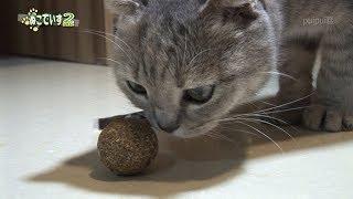 【ミントボールと猫】ころころにゃ thumbnail