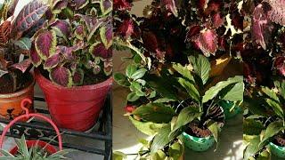 छाया में ही खुश रहते हैं यह पौधे, shade loving plants, Anvesha,s creativity