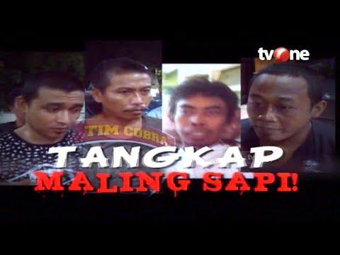 Tangkap Maling Sapi! | Buru Sergap tvOne (20/5/2019)