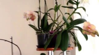 Как правильно ухаживать за Орхидеями. Много полезных советов(В этом видео я Вам расскажу, как правильно поливать Орхидеи, какой водой и дам очень много полезных советов..., 2016-02-17T19:57:14.000Z)
