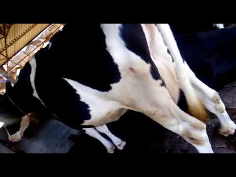 Al Fajr Dairy Farm Hyderabad.