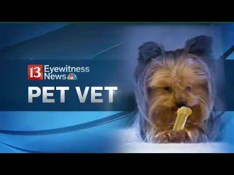 Pet Vet: Overweight pets