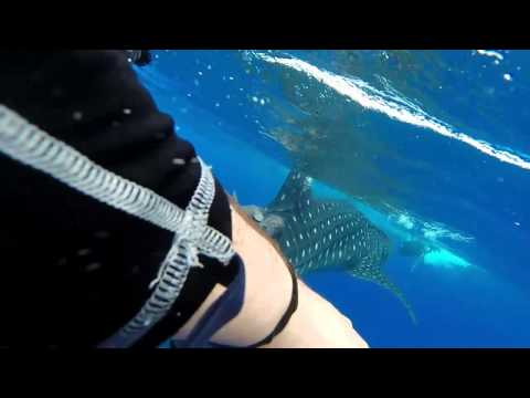 Swimming with a Whale Shark - Corn Island, Nicaragua 01-May-2014