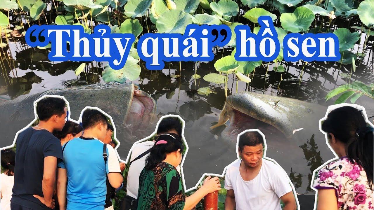 """Trăm người đi xem """"Thủy Quái"""" - Cá trê Khổng Lồ trong Công viên văn hóa Gò Vấp - Gofood vn"""